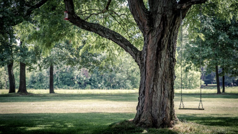 How to Hang a Baby Swing from a Tree: The Definitive Guide